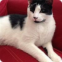 Adopt A Pet :: Brady - Fairfield, CT