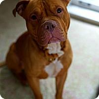 Adopt A Pet :: Rudolph aka Rudy - Leesburg, FL