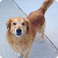 Adopt A Pet :: Maxwell - Portland, ME