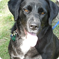 Adopt A Pet :: Libby - Lewisville, IN