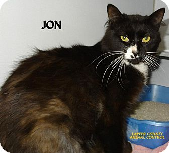 Domestic Longhair Cat for adoption in Lapeer, Michigan - JON--HANDSOME! FEE WAIVED