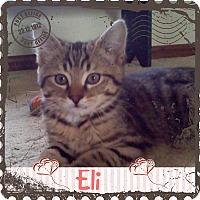 Adopt A Pet :: Eli - Jeffersonville, IN