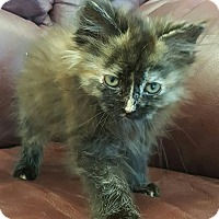 Adopt A Pet :: Michelle Obama - Albemarle, NC