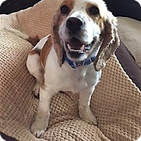 Adopt A Pet :: Savannah-ADOPTION PENDING - Sacramento, CA