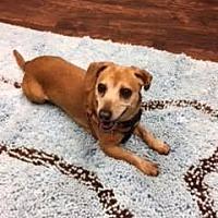 Adopt A Pet :: Maddie - Valparaiso, IN
