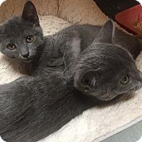Adopt A Pet :: Alana - Encinitas, CA