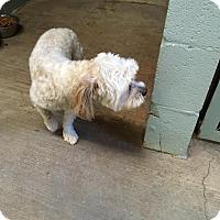 Adopt A Pet :: Terry - The Village, OK