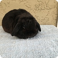 Adopt A Pet :: 8-Ball - Bonita, CA