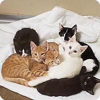 Adopt A Pet :: Snow White171458 - Atlanta, GA