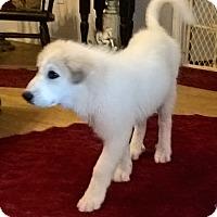 Adopt A Pet :: Louise - Kyle, TX