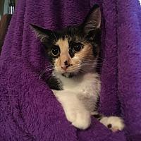 Adopt A Pet :: Taffy - Cleveland, TN