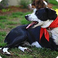Adopt A Pet :: Taft - so gentle VIDEO - Monrovia, CA