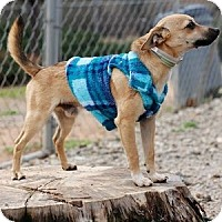 Adopt A Pet :: Tito - Athens, GA