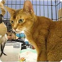 Adopt A Pet :: Pasha - Riverside, RI