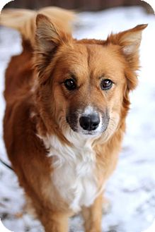 Collie/Shepherd (Unknown Type) Mix Dog for adoption in Craig, Colorado - Carmel