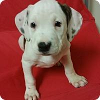 Adopt A Pet :: Skye *PENDING* - Lima, OH