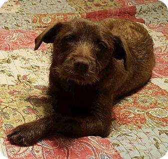 Terrier (Unknown Type, Medium) Mix Dog for adoption in WESTMINSTER, Maryland - Abby