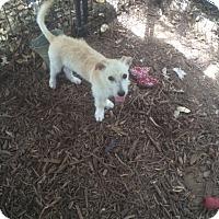 Adopt A Pet :: Mason - Fair Oaks Ranch, TX