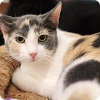 Adopt A Pet :: Peach - Sacramento, CA