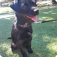 Adopt A Pet :: Pip - Lodi, CA
