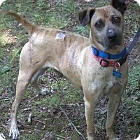 Adopt A Pet :: Brayden - Roswell, GA