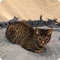Adopt A Pet :: Maddox - Des Moines, IA
