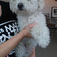 Adopt A Pet :: YUKI - Phoenix, AZ