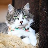 Adopt A Pet :: Elura - Mission, KS