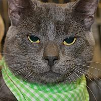 Adopt A Pet :: STONE - Clayton, NJ