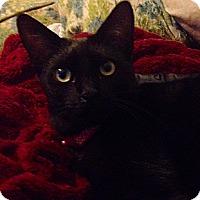 Adopt A Pet :: Casanova - Santa Rosa, CA