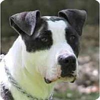 Adopt A Pet :: Millie - Chicago, IL