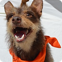 Adopt A Pet :: Toto - Aurora, CO
