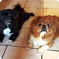 Adopt A Pet :: Emma & Gabby - Osseo, MN