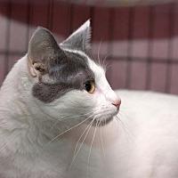 Adopt A Pet :: Teanna - Lombard, IL