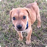 Adopt A Pet :: Trenton - Gainesville, FL