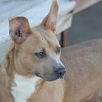 Pit Bull Terrier Mix Dog for adoption in Yukon, Oklahoma - Sabrina
