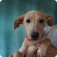Adopt A Pet :: Sally - Oviedo, FL