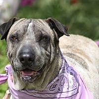 Adopt A Pet :: SOPHIE - Poway, CA