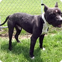 Adopt A Pet :: Chako - Olive Branch, MS