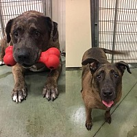 Adopt A Pet :: Sarge and Pudge - Valley Center, CA
