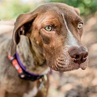 Adopt A Pet :: GRACIE - Pt. Richmond, CA