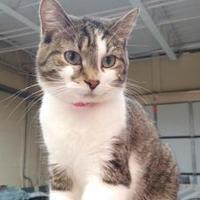 Adopt A Pet :: Maizey - Erie, PA