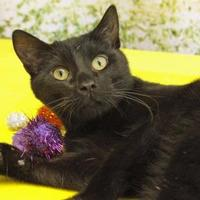 Adopt A Pet :: Panz - Bristol, IN