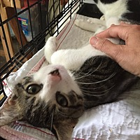 Adopt A Pet :: Tippy - Middletown, NY