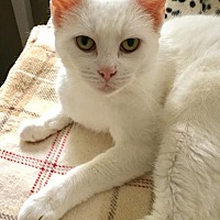 Adopt A Pet :: Dahlia - Stanhope, NJ