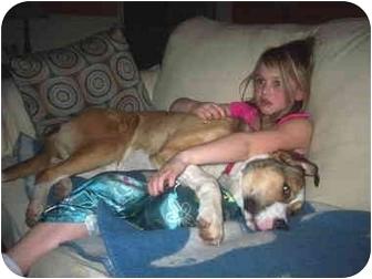 Beagle/Labrador Retriever Mix Dog for adoption in kennebunkport, Maine - BUDDY in Maine!