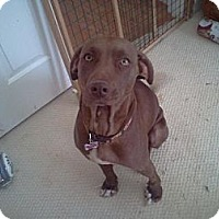 Adopt A Pet :: Gracie - Albany, NY
