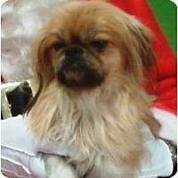 Adopt A Pet :: Cookie - Duluth, GA