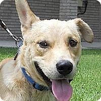 Adopt A Pet :: Buddy2 - Kingwood, TX