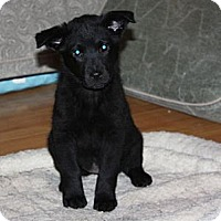 Adopt A Pet :: Avery - PENDING, in Maine - kennebunkport, ME